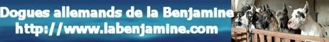 La Benjamine - Dogues bleus, noirs, arlequins